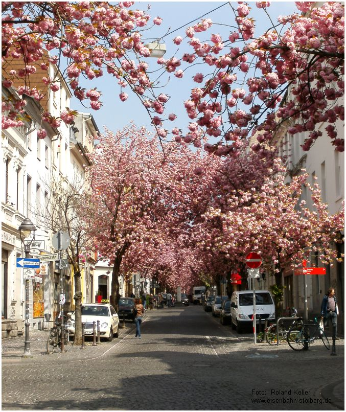 2015_04_22_Bonn_Heerstrasse_Kirschbluete_x4_F
