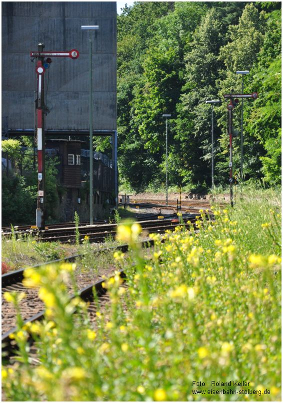 2015_07_11_BfStolberg_Altstadt_Sommerblumenwiese_x2_F